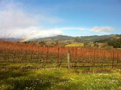 Photo of vineyards and rainbow